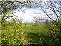 SJ3024 : Pasture near Maesbury Marsh by Des Blenkinsopp