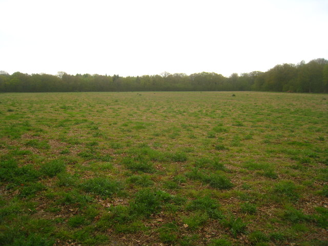 Looking across Copse Ground Field (10 acres) by Sandy B