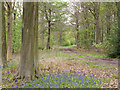 NZ1222 : Woodland track with bluebells by Trevor Littlewood