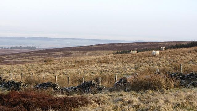 Dyke, Black Hill