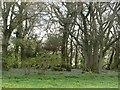 SO4908 : A small wood by Richard Webb