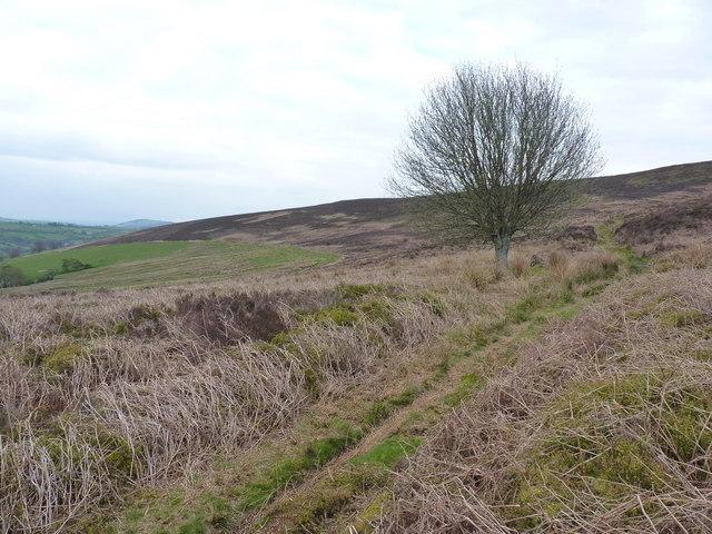 Ffordd Y Saeson - the bridleway between Rhŷd Caledwynt and Bwlch y Dolydd
