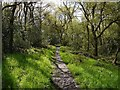 NZ1062 : Path, Priestclose Wood Nature Reserve by Andrew Curtis