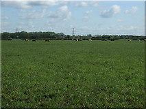 SK8159 : Farmland off Langford Lane by JThomas