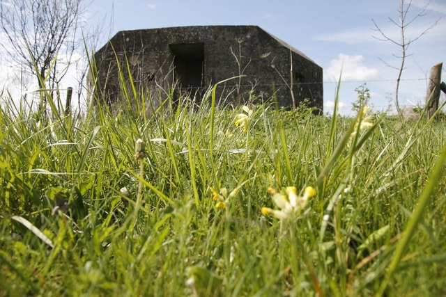 Cowslips and grass