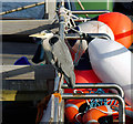 J5082 : Heron, Bangor by Rossographer
