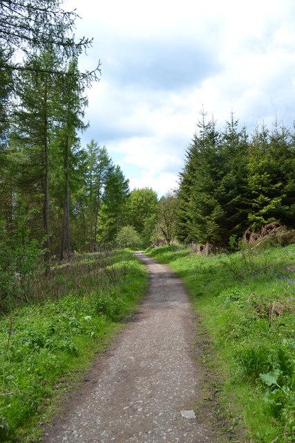 Woodland path - Bouns Corner