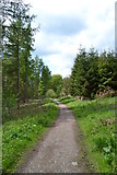 SK2466 : Woodland path - Bouns Corner by Neil Theasby