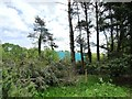 SJ7371 : Eastern boundary, Shakerley Mere by Christine Johnstone