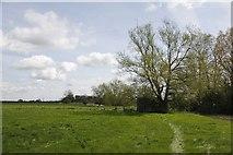 SU2598 : Area by the pillbox by Bill Nicholls