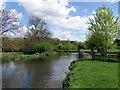 TM0733 : River Stour at Flatford by PAUL FARMER