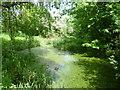 TQ2770 : Pond in Myrna Close Valley by Marathon
