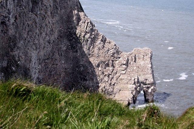 Scale Nab at Bempton Cliffs