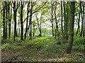 SU9823 : In the corner of Warren Wood by Robin Webster