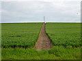 SU9923 : Footpath south of Warren Wood by Robin Webster