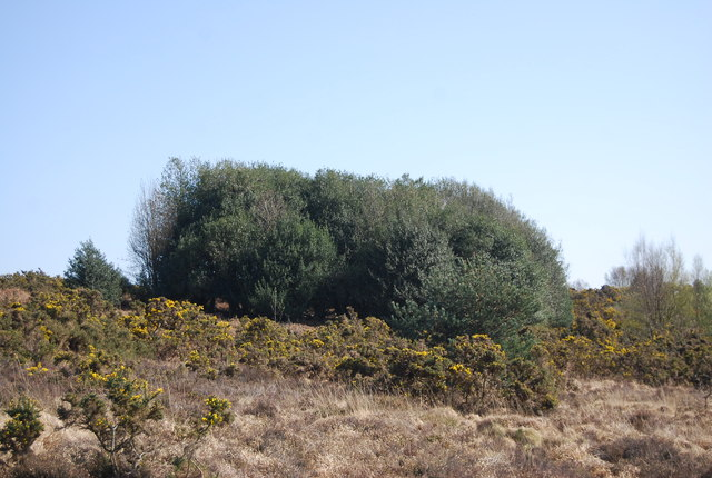 Bushes and gorse