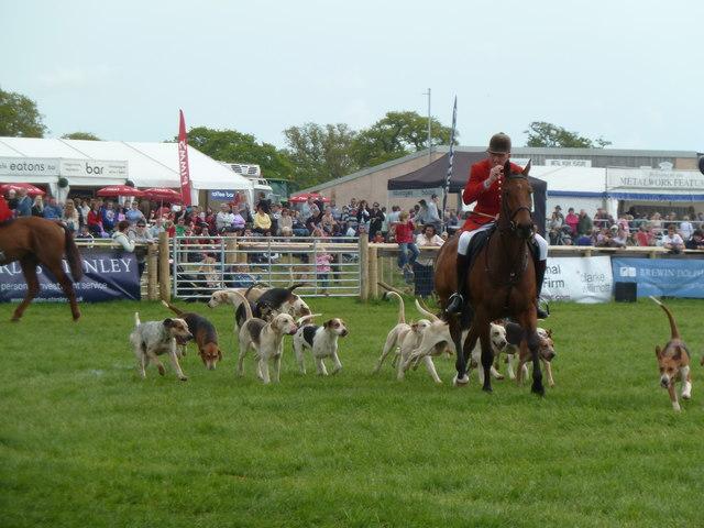Devon County Show - parade of hounds