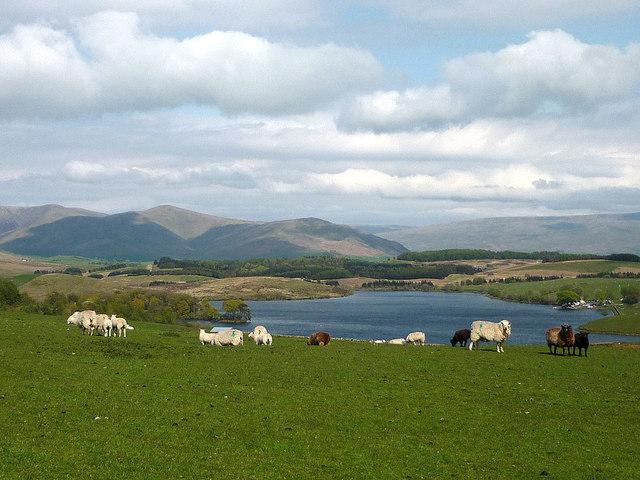Sheep pasture above Killington Reservoir