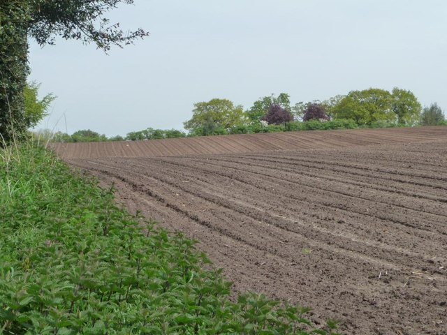 Western edge of large bare field