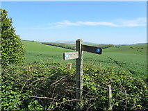 TQ3710 : Weathered Signpost on the South Downs Way by Chris Heaton