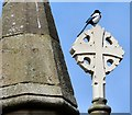 SJ9297 : Magpie at St Stephen's by Gerald England