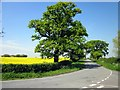 SJ4665 : Cotton Edmunds, Cheshire by Jeff Buck