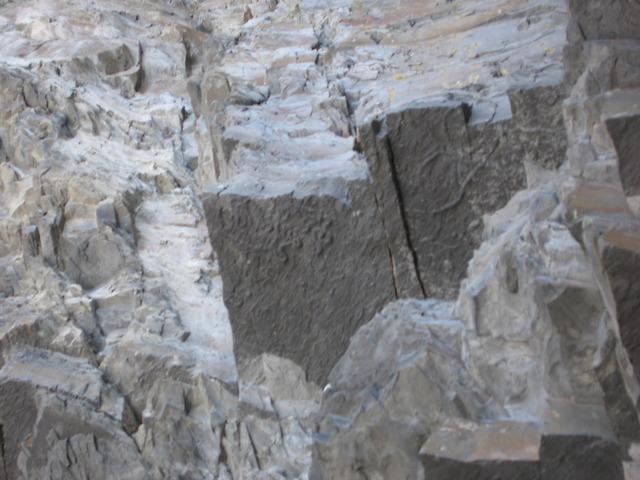 Aberystwyth Grits - worm burrows