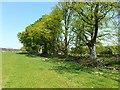 NZ0184 : Shelter belt, Broom House Farm by Oliver Dixon