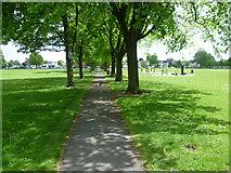 TQ2869 : Avenue of trees on Figge's Marsh by Marathon