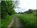 TQ2968 : Mitcham Common alongside Windmill Road by Marathon