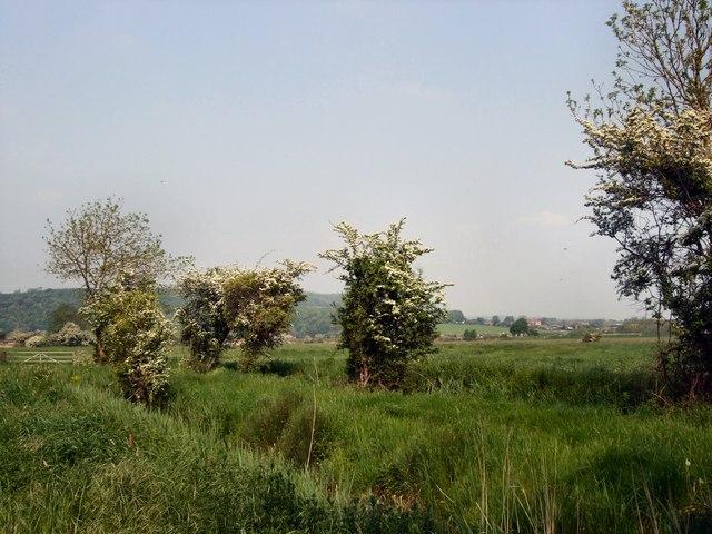 Shrubs near River Arun