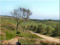 SD6413 : Rivington Moor, Belmont Road by David Dixon