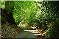 SU9338 : Church Lane, Sandhills, Surrey by Peter Trimming