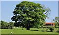 J2761 : Tree, Ravernet near Lisburn by Albert Bridge