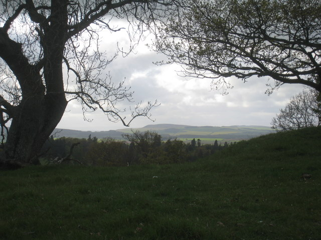 Brooding country, Chillingham Park