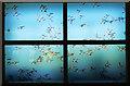 J4967 : Window, Castle Espie by Rossographer