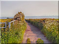 SJ4781 : Lighthouse Road by David Dixon
