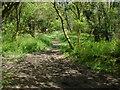 SU7431 : Paths meet, Noar Hill Hanger by Alan Hunt
