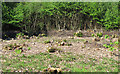 TQ6895 : Coppiced area by Roger Jones