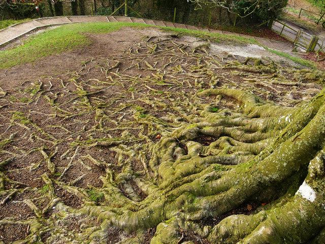 Avebury - Roots