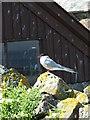NU2135 : Arctic Tern by Christine Westerback