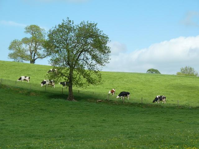 Pasture northeast of Jubilee Bridge