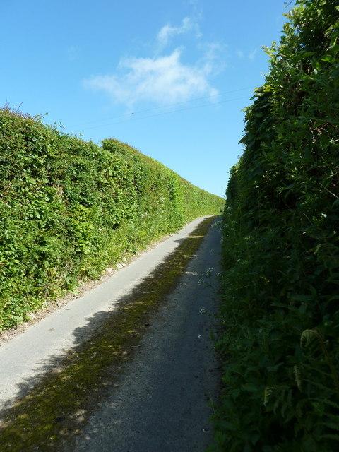 Newbiggin Lane