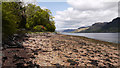 NG9119 : Shore of Loch Duich at Ratagan by Trevor Littlewood