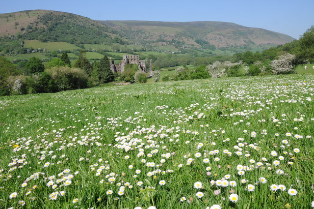 Daisies and Llanthony Priory