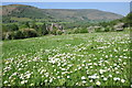 SO2927 : Daisies and Llanthony Priory by Philip Halling