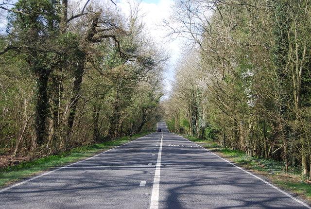 A264, Rookery Wood