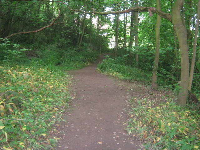 Woodland path on the banks of the River Tees