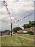 TQ7568 : Bunting, Chatham by David Anstiss