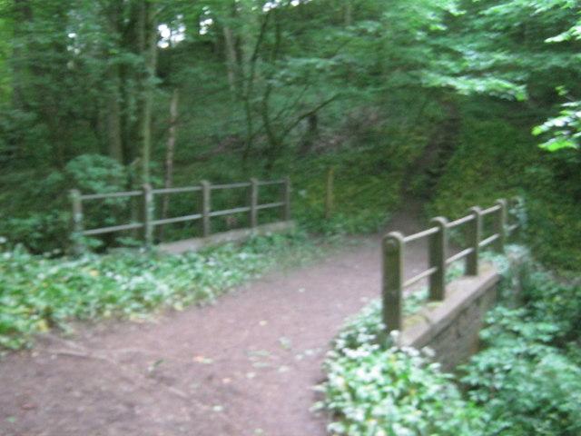 Footbridge carrying The Teesdale Way in Dinsdale Wood